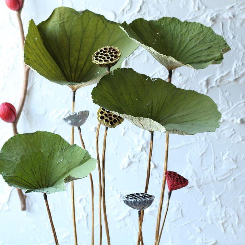 天然荷叶真杆彩色莲蓬天然家居装饰荷叶绿色艺术干花干叶拍摄道具券后15.80元