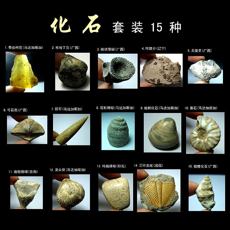 Минеральная из камень AF2013* рок минеральная знак это * из каменные наборы наряд 15 семена (200g) отдавать магазин тибет коробка *XR