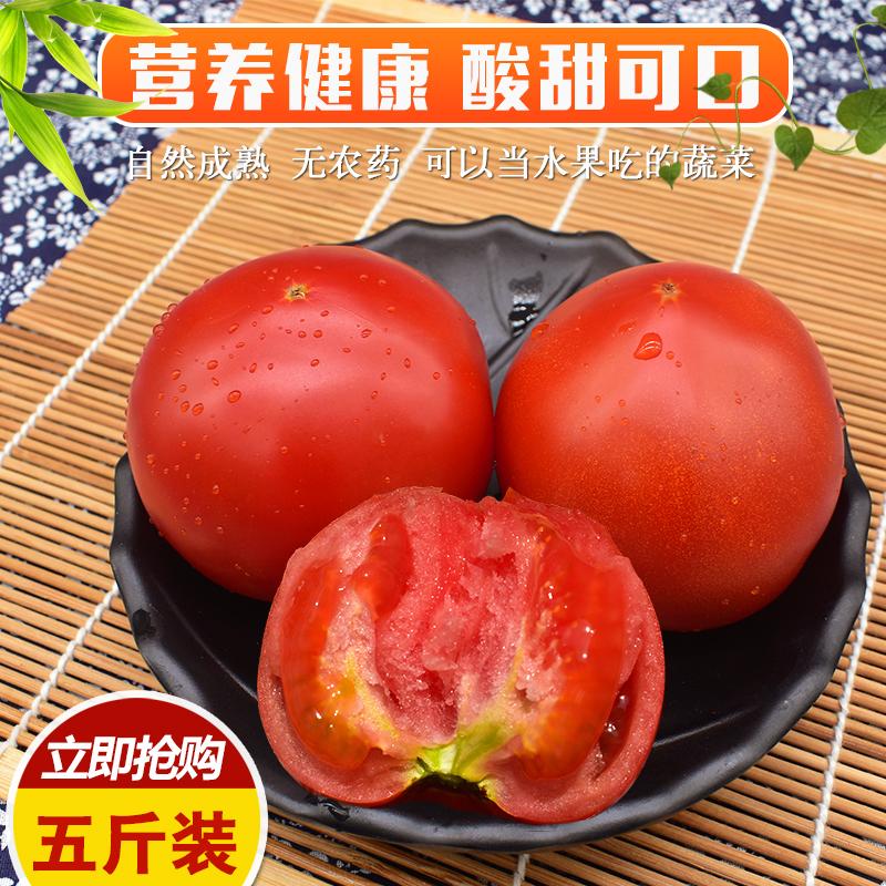 山东特产现摘农家自然熟西红柿新鲜纯天然自种番茄洋柿子5斤包邮