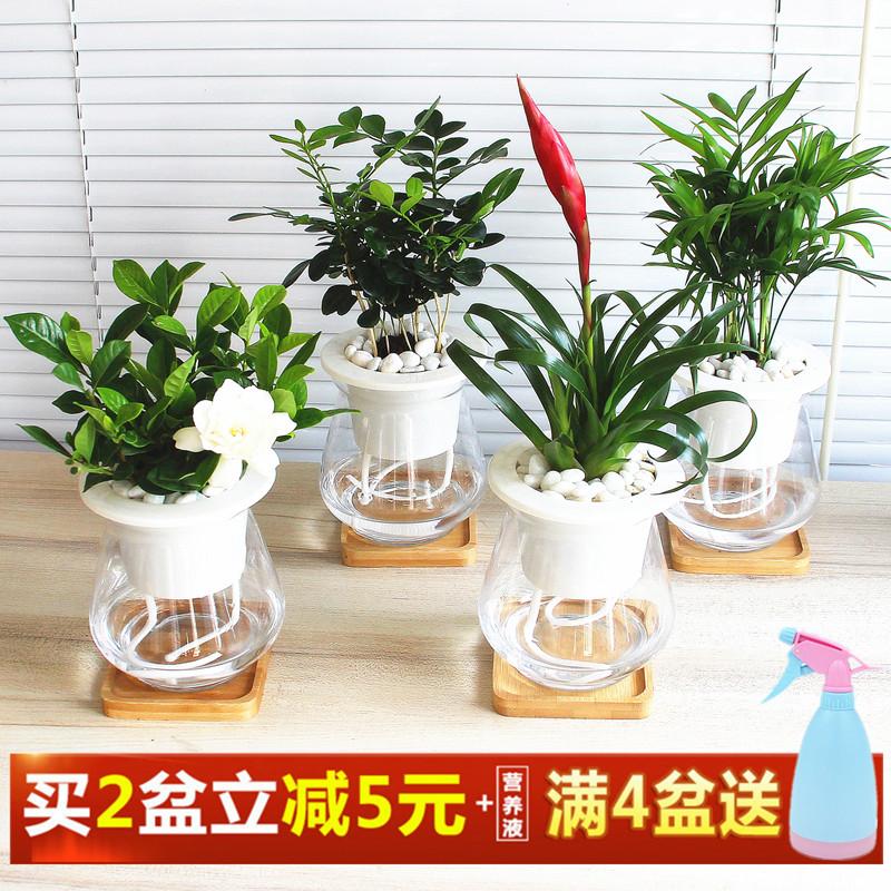 发财树绿萝栀子花水培植物盆栽室内花卉文竹芦荟虎皮兰办公室绿植