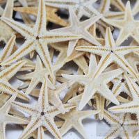 Природный морская звезда в обувь маленькое море звезда пальцы морская звезда раковина оболочка домой земля тайвань декоративный