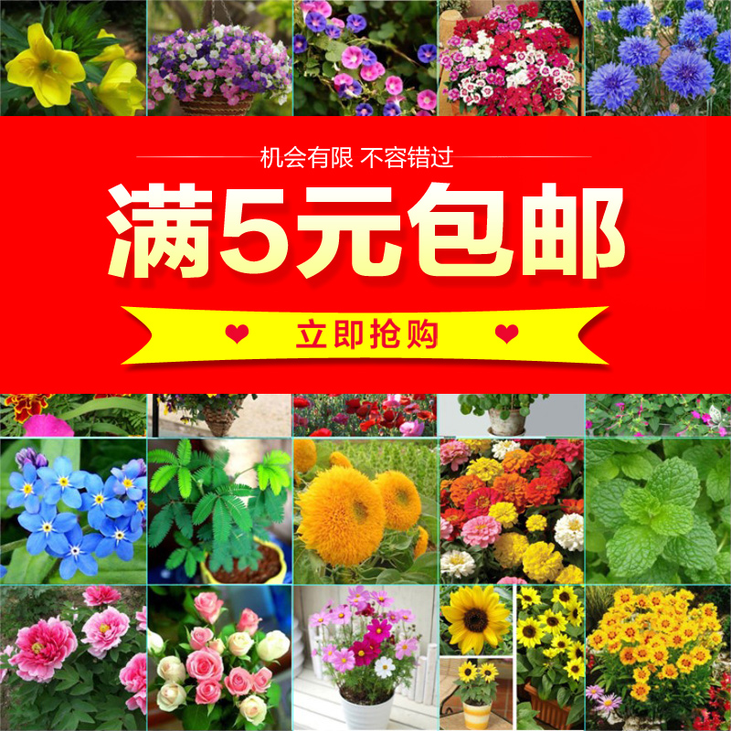花�N子四季易�N植物盆栽草莓含羞草薄荷�M天星向日葵庭院��_花卉