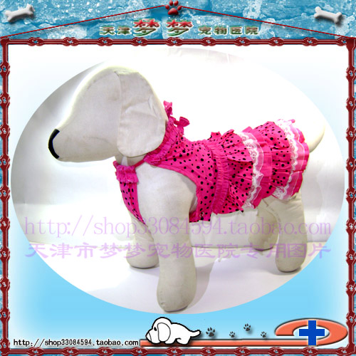 Crown reputation: pet dog clothing autumn and winter clothing - legs - Jinwei Lace & amp; auricular skirt * mail