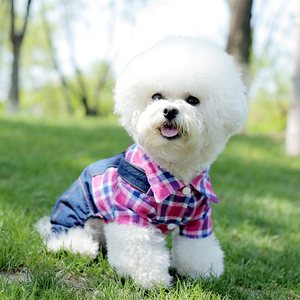 狗狗衣服泰迪衣服春装宠物衣服四脚衣春夏装秋比熊贵宾犬小狗衣服