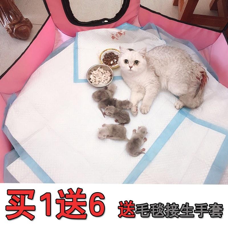 宠物怀孕猫产房猫窝狗狗产房产箱生育窝封闭式窝接生用品繁殖帐篷
