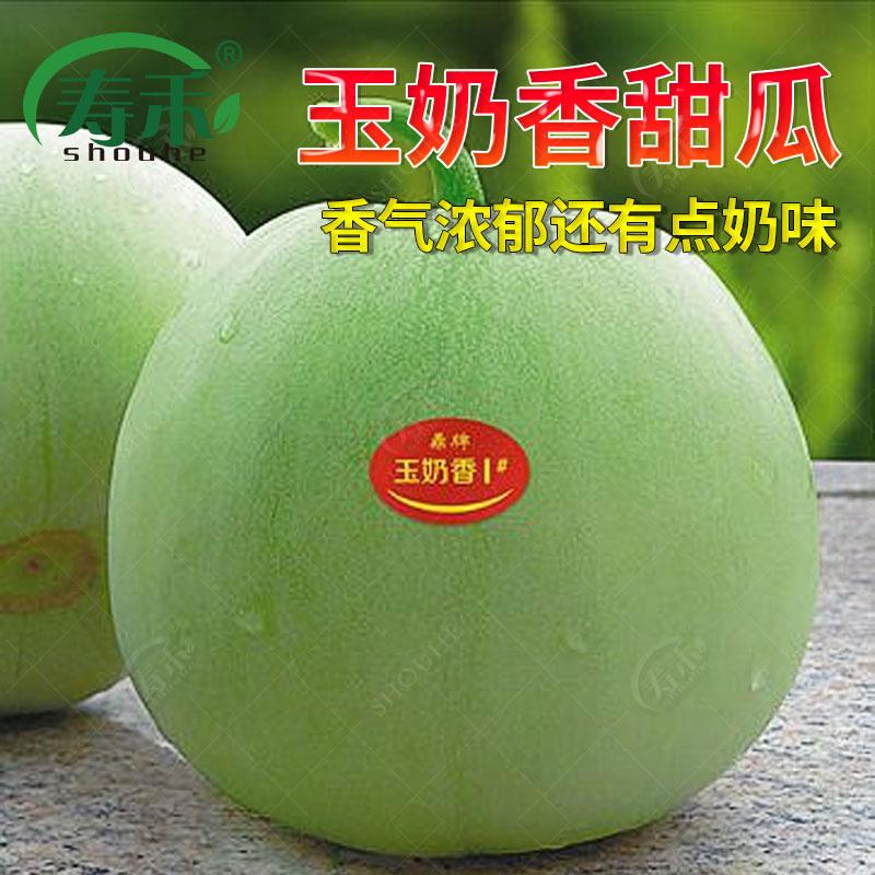 鼎牌 玉奶香薄皮甜瓜种子 浓香188绿皮香瓜 香甜浓郁带奶香味瓜果