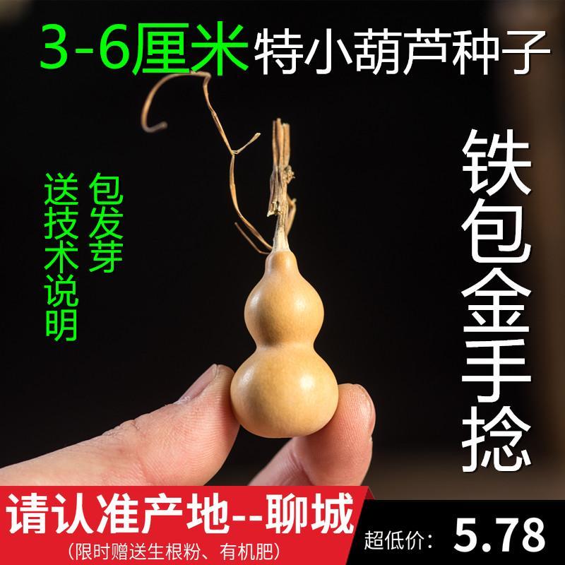 Природный суперспециальный малый средний интерьер Восковое семя тыквы Американское железо пакет Золотые тыквенные семечки тыквы 8 семян тыквы