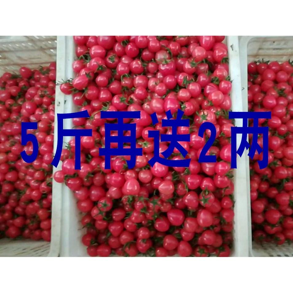 新鲜千禧圣女果5斤 樱桃小西红柿番茄水果小柿子 包邮