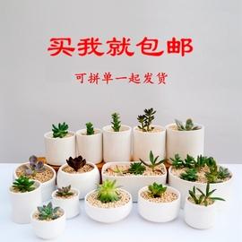 新品包邮白瓷多肉陶瓷迷你盆栽白色现代简约个性可爱桌面白色花盆
