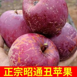 云南当季冰糖心野生丑应季孕妇苹果