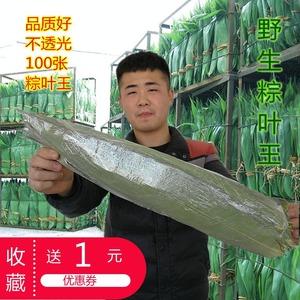 干粽叶包粽子的大粽子叶新鲜粽叶干粽子叶100张竹棕叶包邮