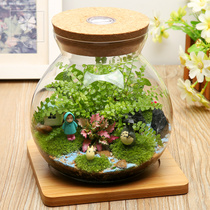 Micro landscape ecological Bottle Creative potted Moss plant DIY mini potted desk pendant glass potted plant