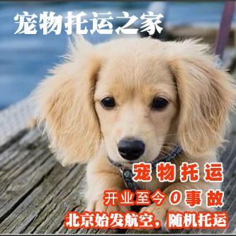 北京宠物托运,航空随机托运,代办铁路托运,国际国内宠物托运