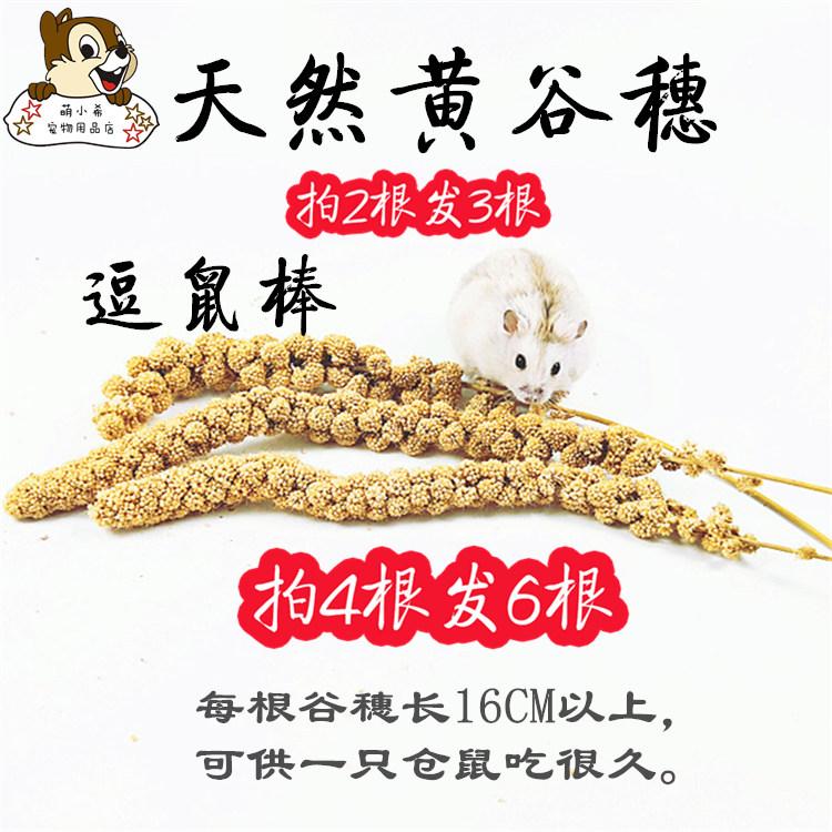 [萌小希宠物饲料,零食]仓鼠天然黄谷穗金丝熊松鼠食物逗鼠棒躺月销量10件仅售1.88元