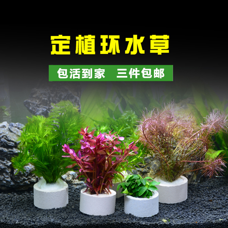 Наполнение для аквариума Артикул 578437210808