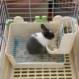 拉士格兔子食盆二合一兔碗食槽固定防扒喂食器龍貓糧飼料食盒草架圖片