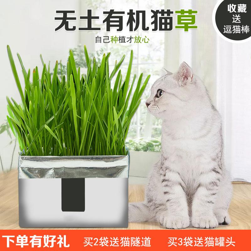 网红猫草零食无土猫薄荷去毛球化毛膏水培小麦苗盆栽种植猫咪用品