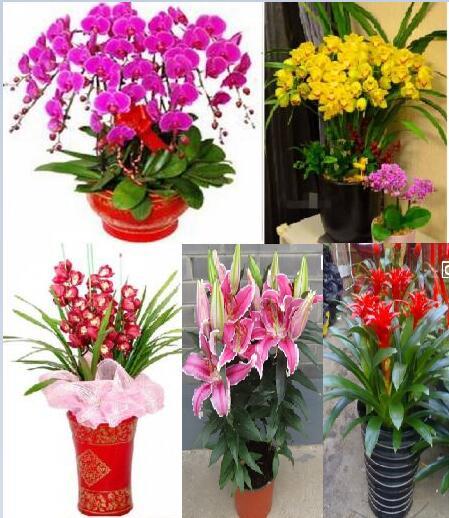 天津市河西区本地花卉蝴蝶兰惠兰盆栽生日节日送礼观赏花送货