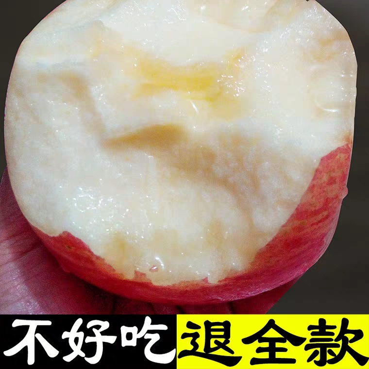Authentic Yantai fresh red Fuji Apple 10 crisp sweet fruit in season
