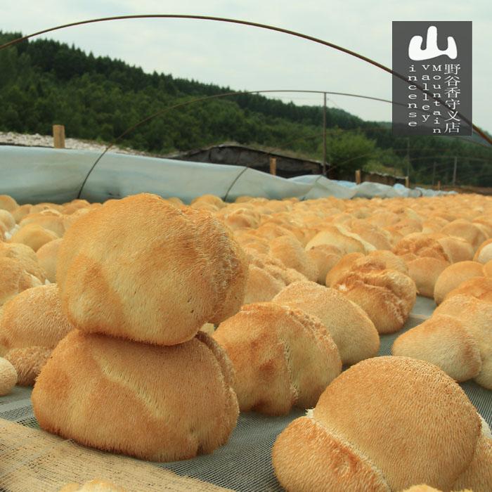 18年新货 猴头菇干货 东北特产正宗新鲜长白山农家仿野生蘑菇200g
