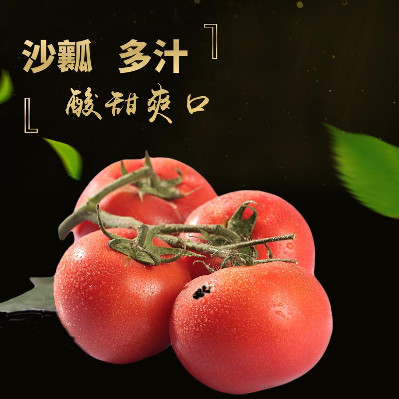 现摘5斤装农家自种新鲜自然熟大小西红柿新鲜番茄洋柿子
