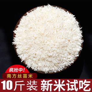 正宗南方优质特级新米江苏香丝苗米