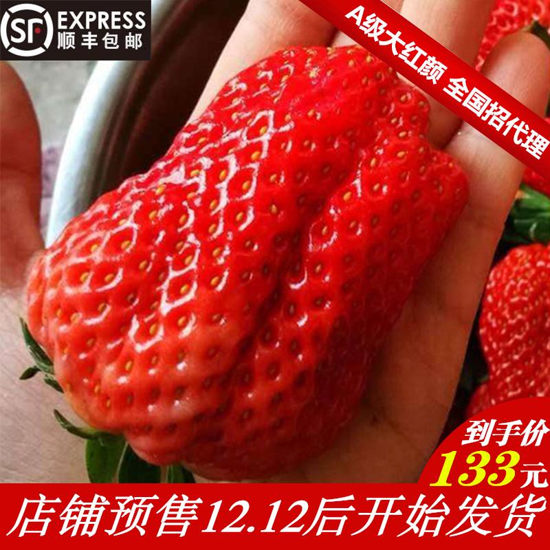 丹东99草莓新鲜水果包邮3斤牛奶草莓新鲜顺丰包邮现摘现发大草莓
