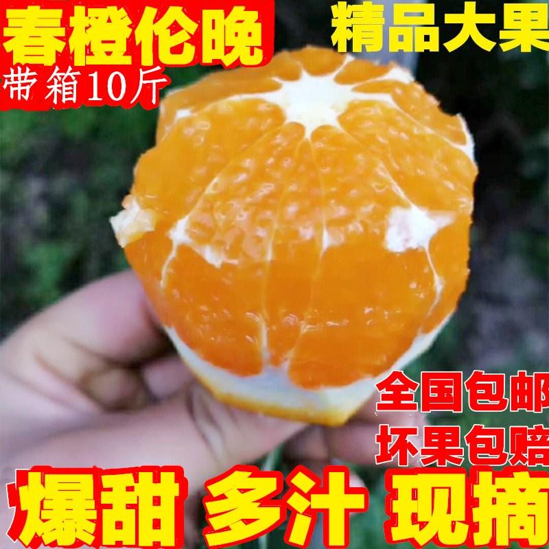 湖北秭归伦晚脐橙10斤包邮现摘新鲜大个甜橙子新鲜水果非赣南夏橙