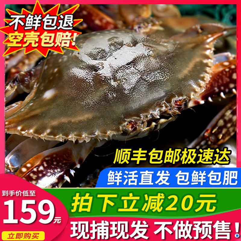 鲜活梭子蟹新鲜螃蟹海蟹青岛海鲜白蟹超大非舟山飞蟹鲜活大公母蟹
