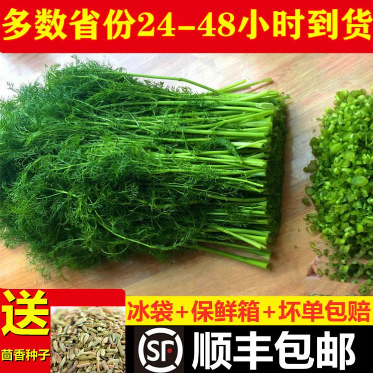 茴香菜4斤新鲜包邮小茴香菜荤香苗山东2斤绿色蔬菜回香苗水嫩同城