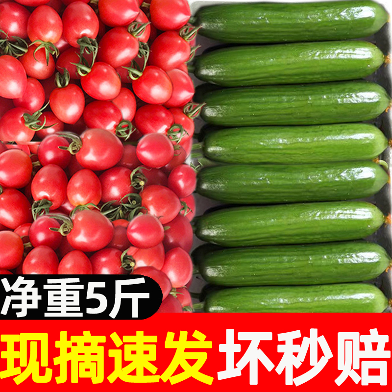 圣女果小黄瓜水果黄瓜新鲜小番茄西红柿子千禧生吃青瓜自然熟5斤