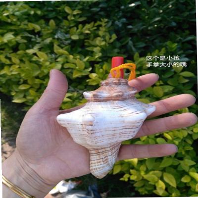 Trumpet horn, large conch toy whistle, childrens creative gift, small ornament, natural shell handicraft.
