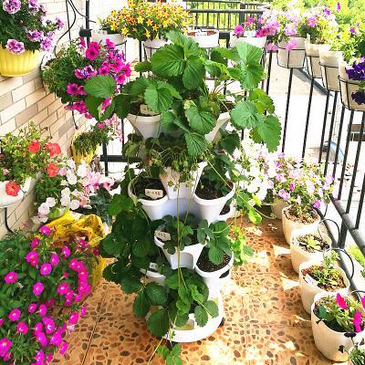 家用阳台种菜盆室内蔬菜种植盆种草莓的花盆专用绿萝吊兰多肉花盆图片