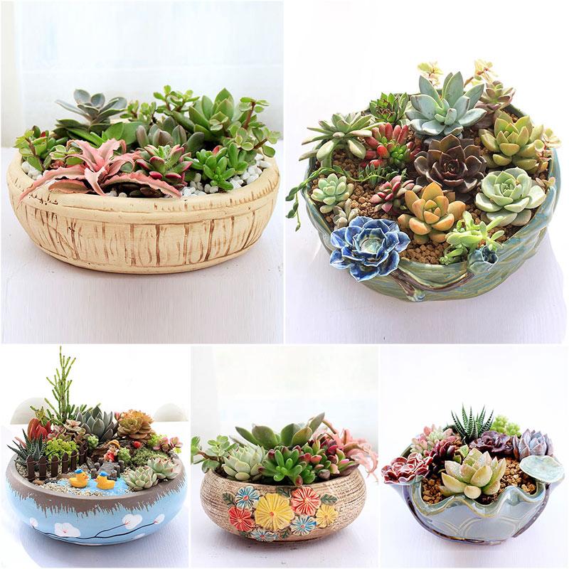 多肉花盆陶瓷大口径肉植物拼盘塑料简约创意特价清仓包邮粗陶大号