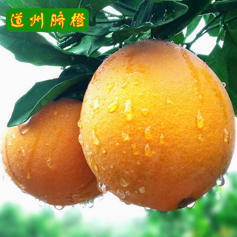 Daozhou navel orange is super sweet, thin skinned and juicy. Fresh citrus fruit is picked and distributed 10 jin. Oranges from Daoxian County, Yongzhou City, Hunan Province