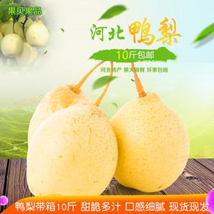 河北鸭梨水晶梨带箱10斤新鲜白梨子赵县特产水果净重8斤天津梨