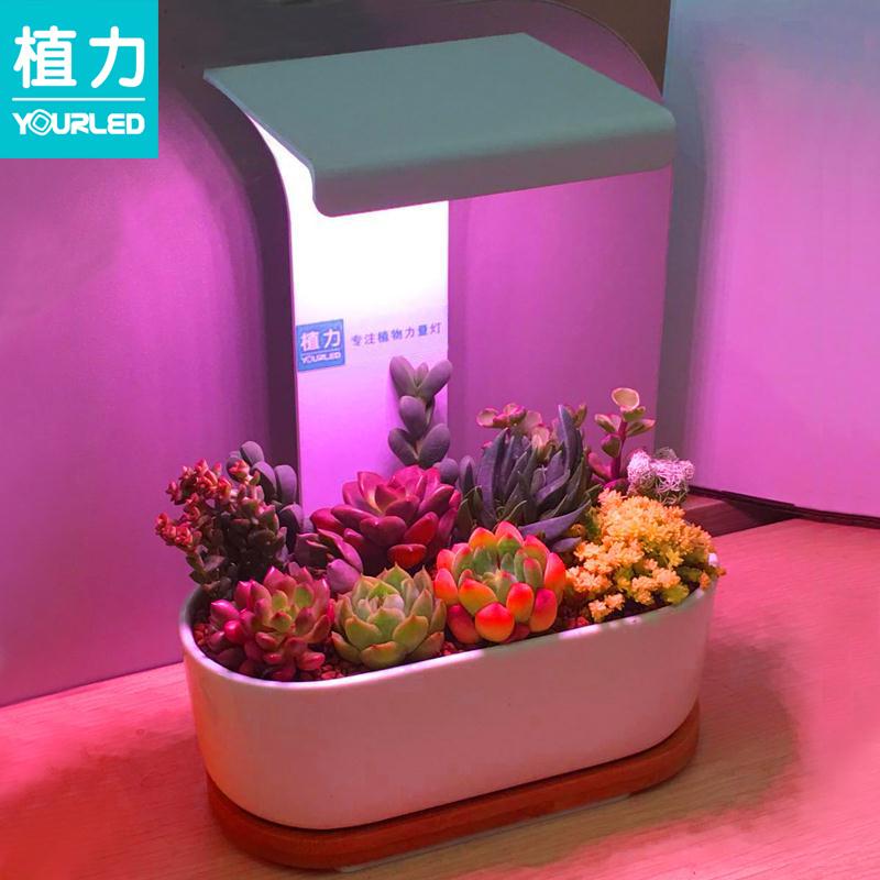 植力【桌面植物灯】多肉补光led全光谱上色USB家用室内育苗种植机