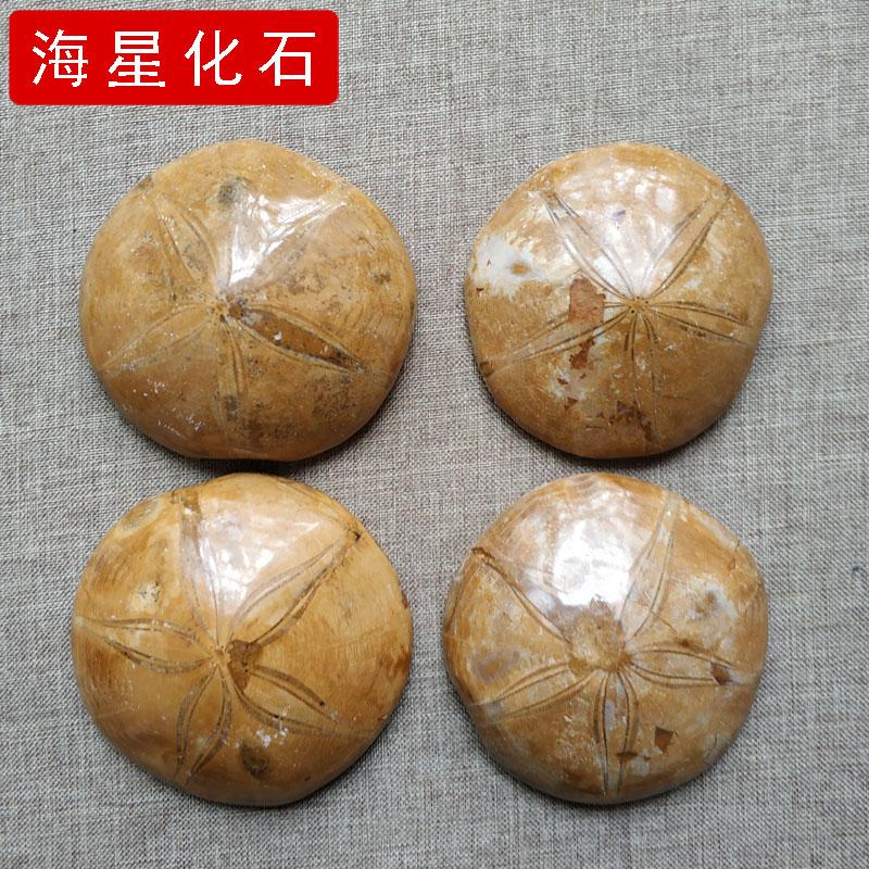 Ископаемые Артикул 583302851682