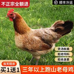 2只正宗3年老母鸡土鸡草鸡柴鸡孕妇月子鸡走地鸡粮食散养安徽特产