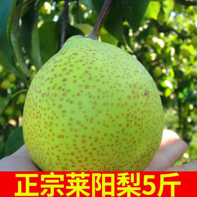 本場の莱陽梨の山東煙台の特産の慈梨は新鮮な妊婦の果物です。