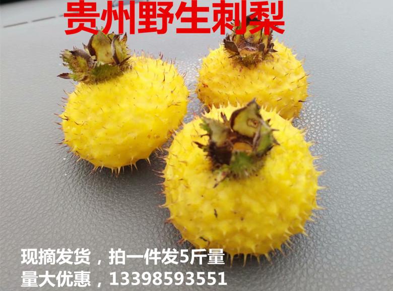 贵州花卉苗木