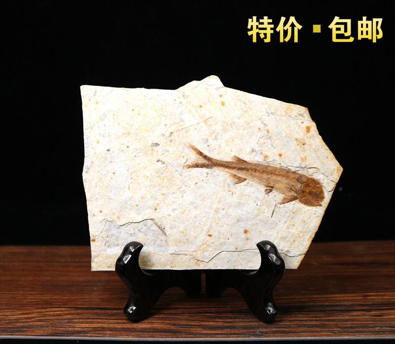 Ископаемые Артикул 529794145067