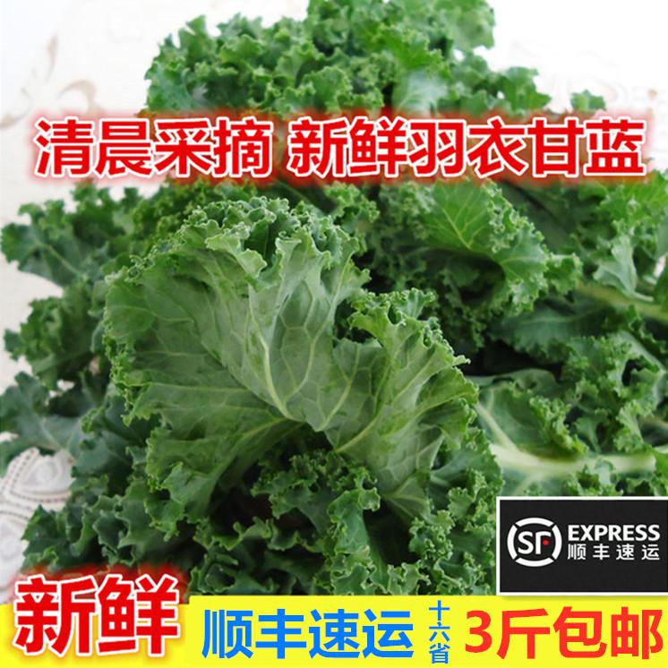 顺丰速运 新鲜蔬菜羽衣甘蓝Kale500g嫩叶芥蓝菜色拉沙拉健身果蔬