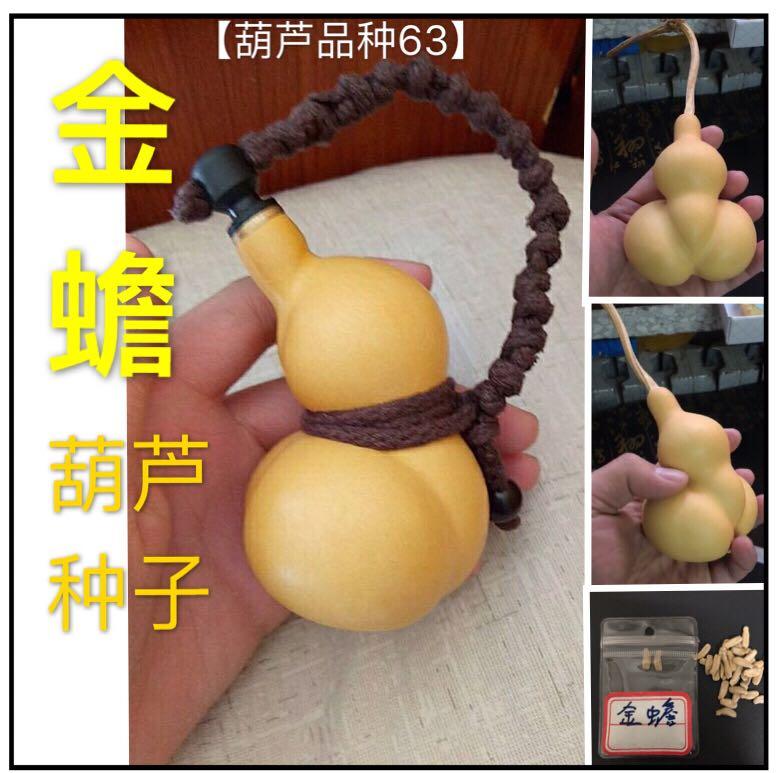 本店葫芦种子齐全勒扎可以手捻也可以做酒葫芦等金蟾葫芦种子籽