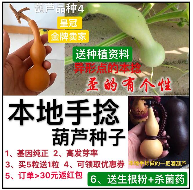本地手捻文玩葫芦种子多年提纯种本捻盆栽特小文玩葫芦籽 包邮