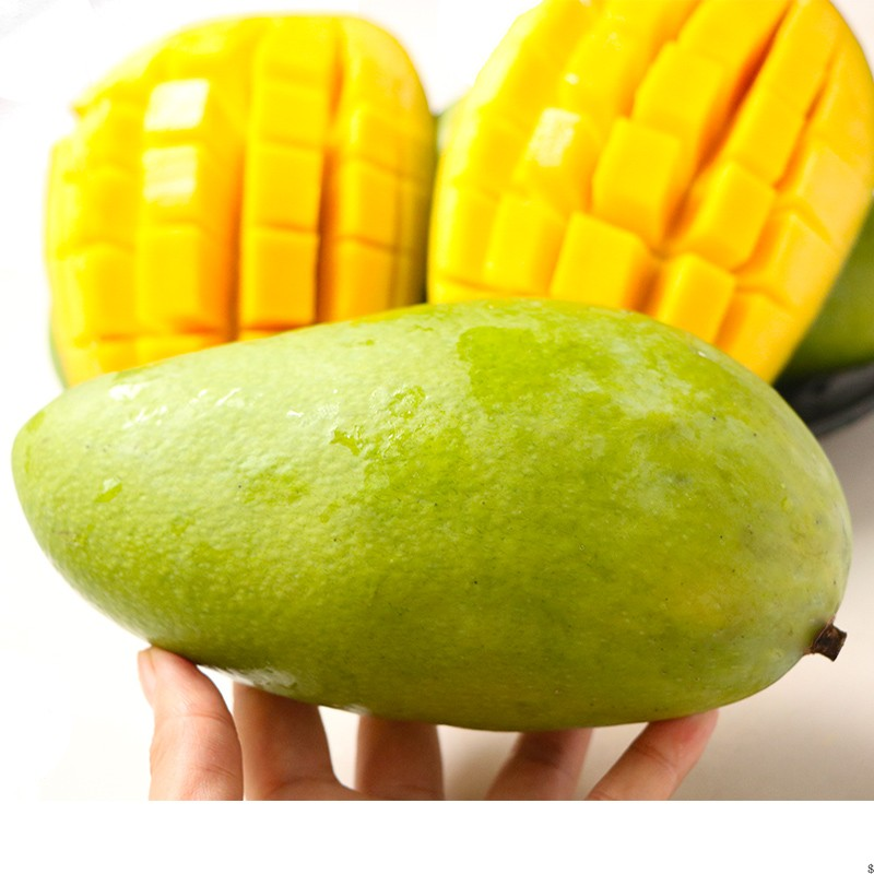 【现摘现发】海南特大芒果整箱10斤当季新鲜水果凯特大青芒大芒果