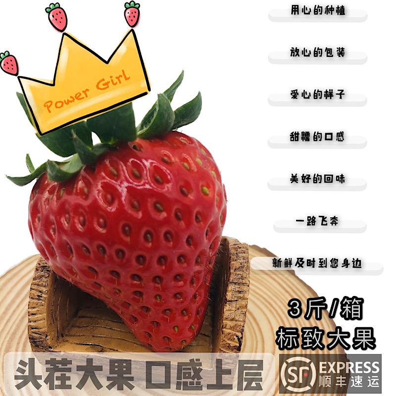 正宗本地红颜草莓生态灌溉牛奶新鲜上海热卖圣诞礼品礼物福利开票