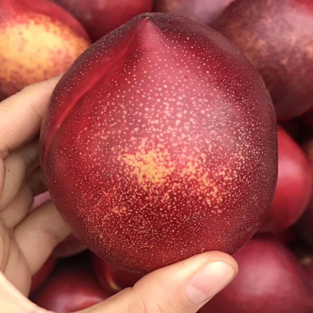 只发哈尔滨吉林 特级丹东麻面油桃新鲜黄心桃子应季水果 5斤装