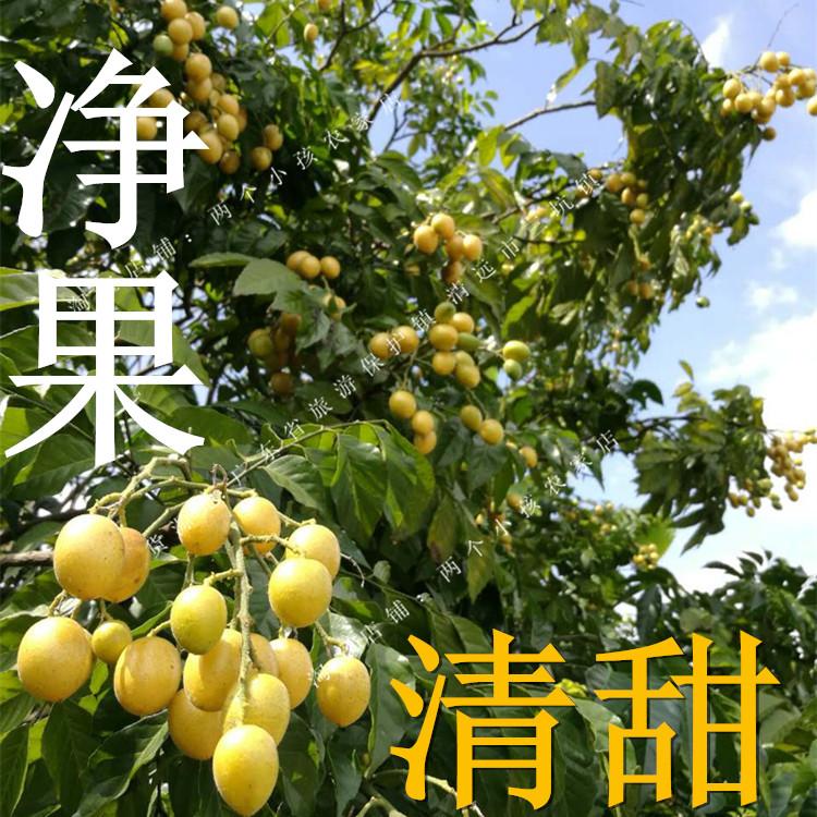 广东现摘黄皮果冰糖鸡心孕妇水果新鲜当季水果3斤净果全甜不酸