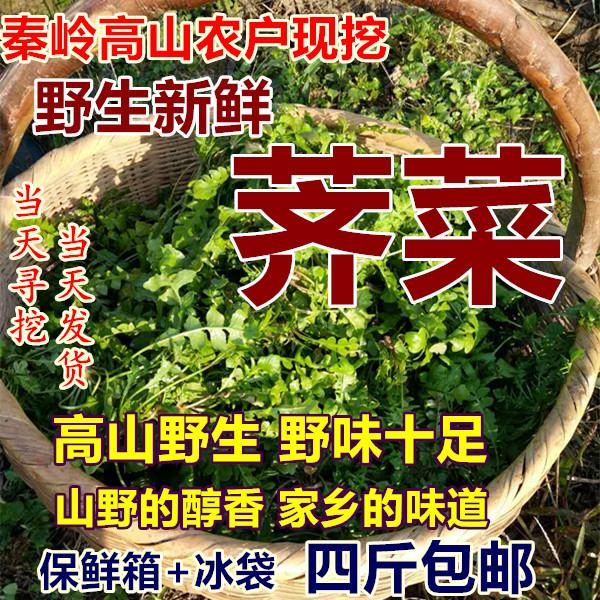 陕西荠菜秦岭野生新鲜野菜现挖地菜芨芨菜蔬菜野生荠荠菜4斤包邮